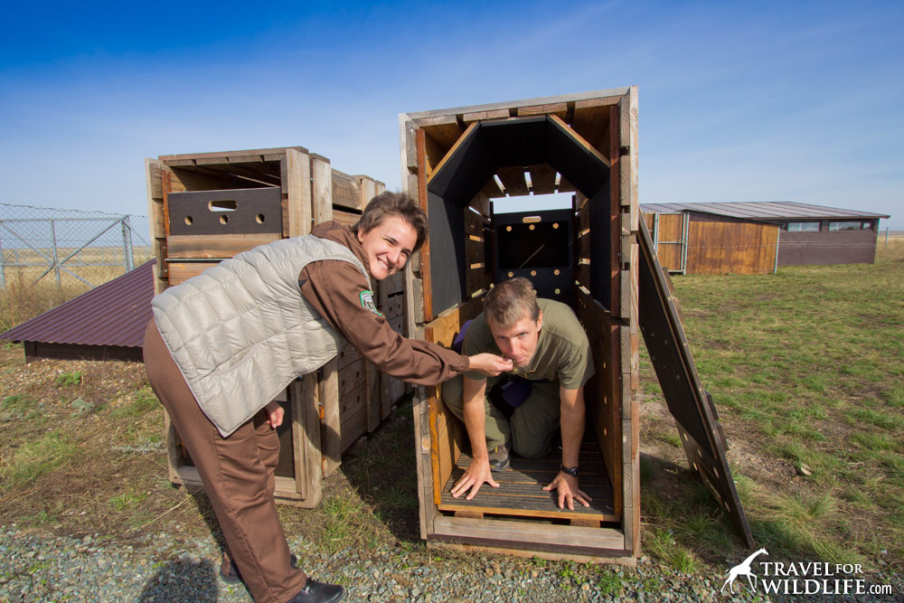 Rafilia Bakirova and Hal Brindley, with Przewalski Horse relocation crates at Preduralskaya Steppe, Orenburg Reserve, Russia