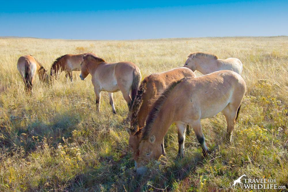 Preduralskaya Reserve, Orenburg, Russia