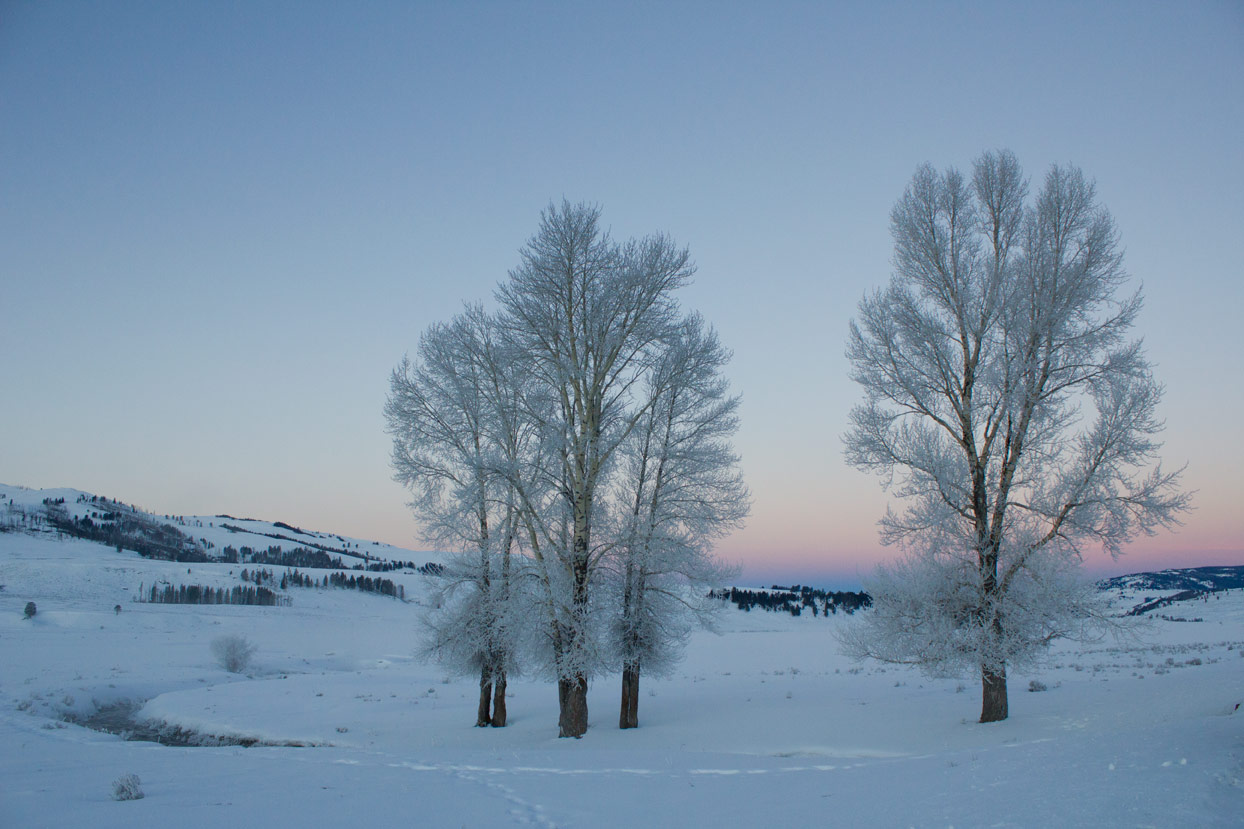 A group of trees before sunrise.
