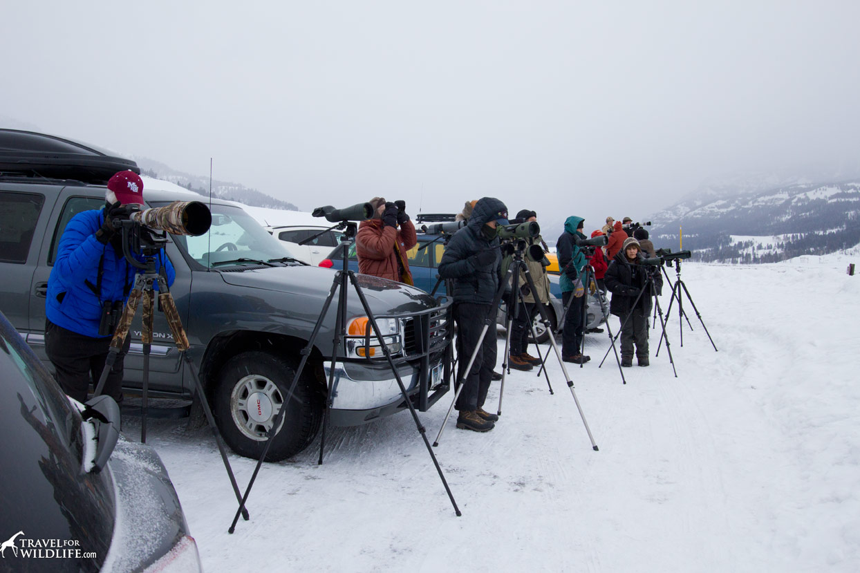 A group of wildlife watchers in Yellowstone in the winter