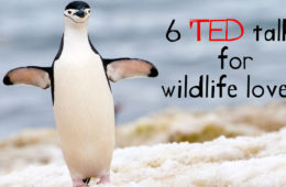 6 wildlife and conservation ted talks