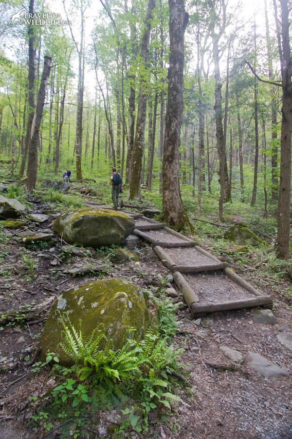 Cove Hardwood nature trail