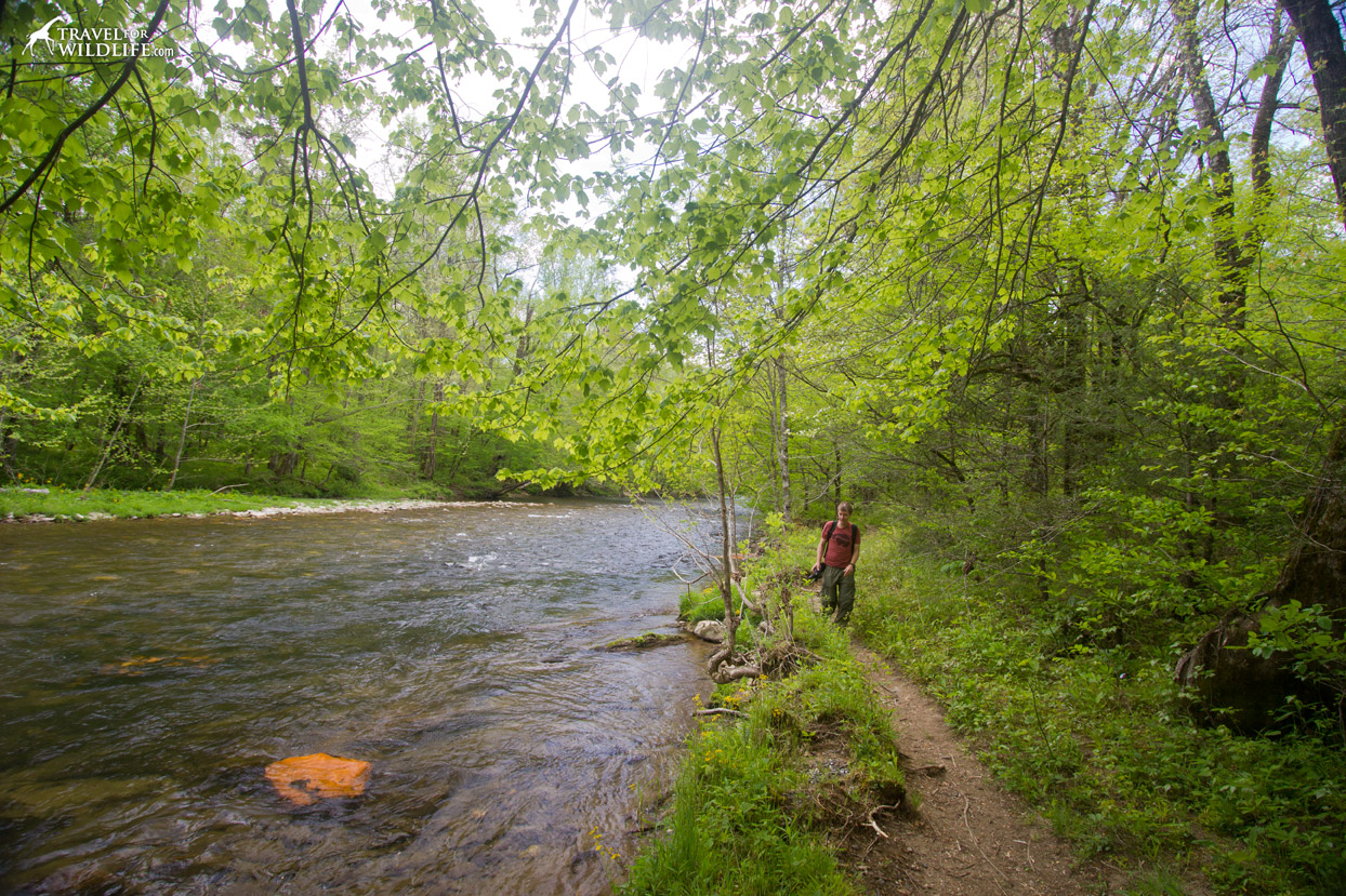 Oconaluftee river trail in the spring, Great Smoky Mountains NP