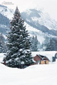 Winter in Yellowstone is like a dreamy postcard