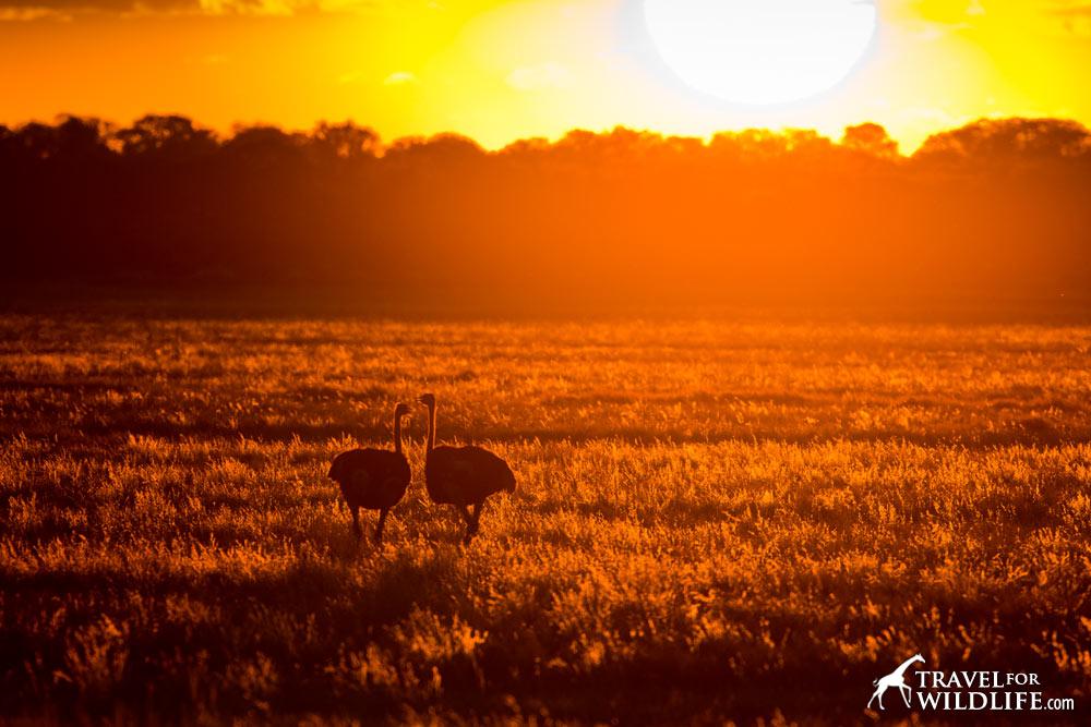 Boso Pan, Mabuasehube, Botswana Gemsbok Park
