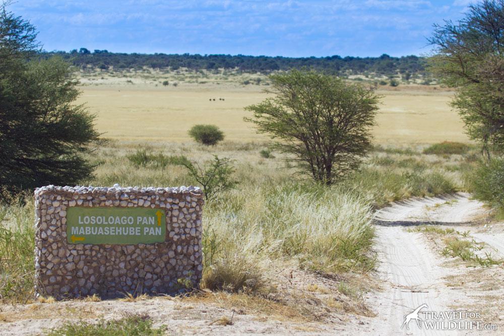 Lesholoago Pan (Losoloago Pan) Mabuasehube, Kgalagadi Transfrontier Park, Botswana