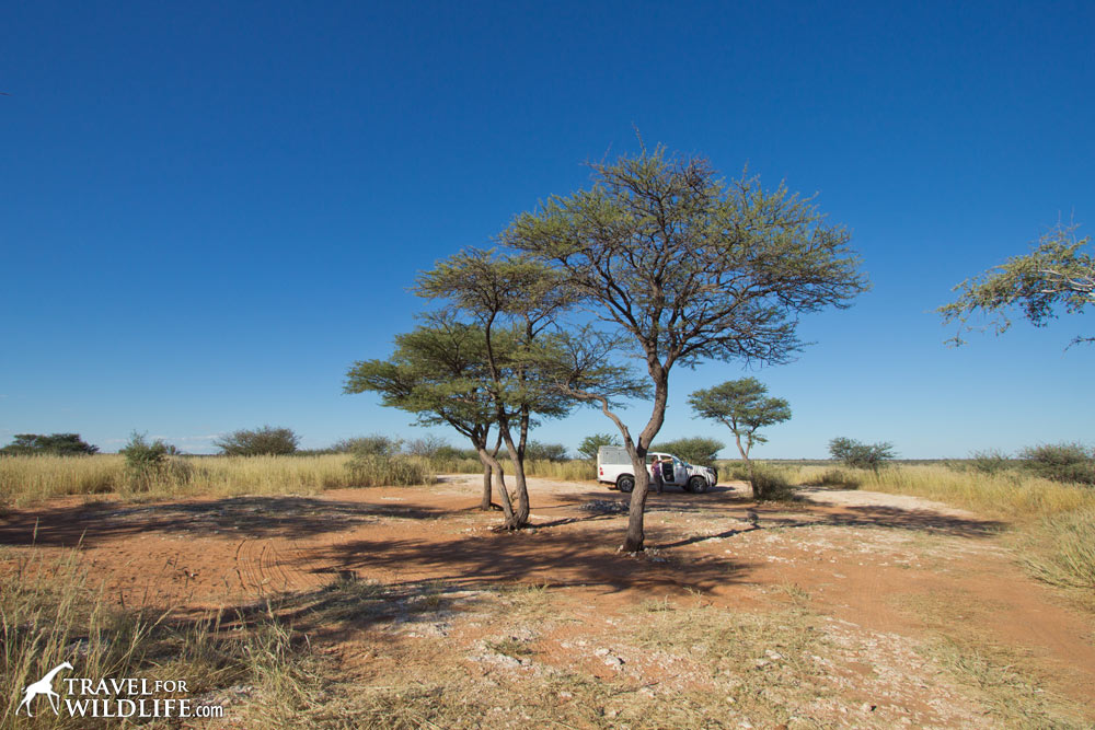 Mabua 1 campsite (aka GMA1) (KTMAB01) in Mabuasehube, Kgalagadi Transfrontier Park, Botswana