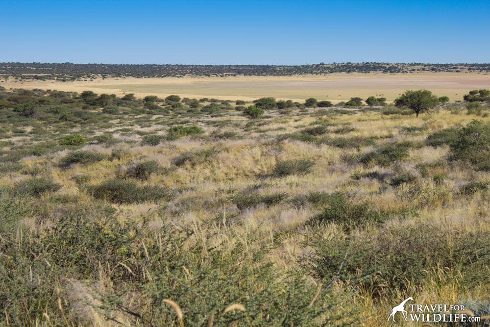 Herd of Gemsbok in Mabuasehube Pan, Kgalagadi Transfrontier Park, Botswana
