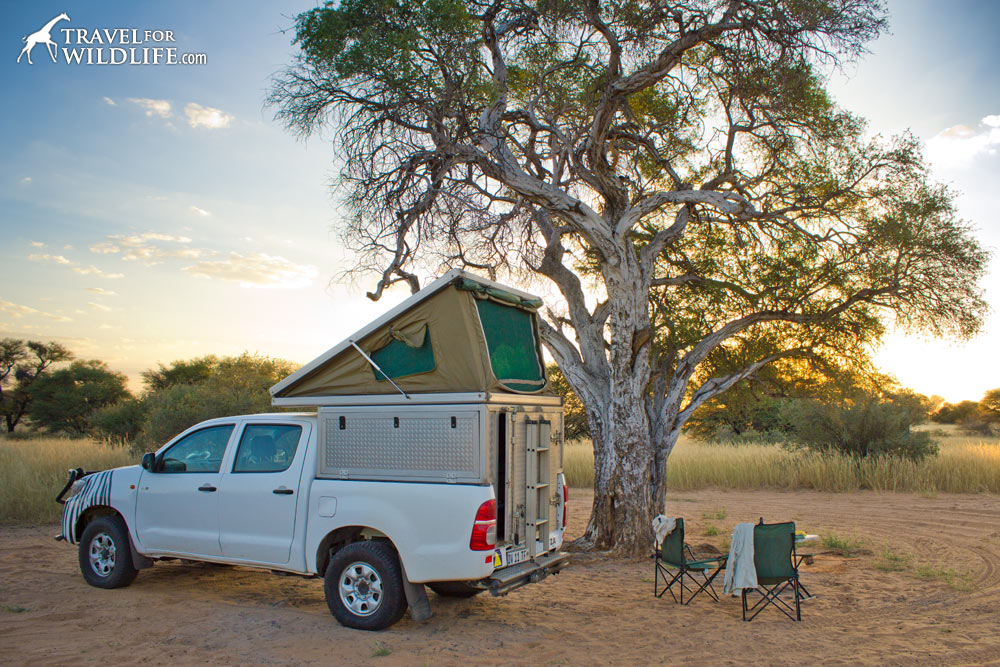 A 4x4 with a roof-top tent in the Kalahari at sunset.
