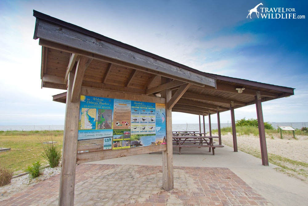 public parking and beach access, Slaughter Beach Pavilion, Delaware