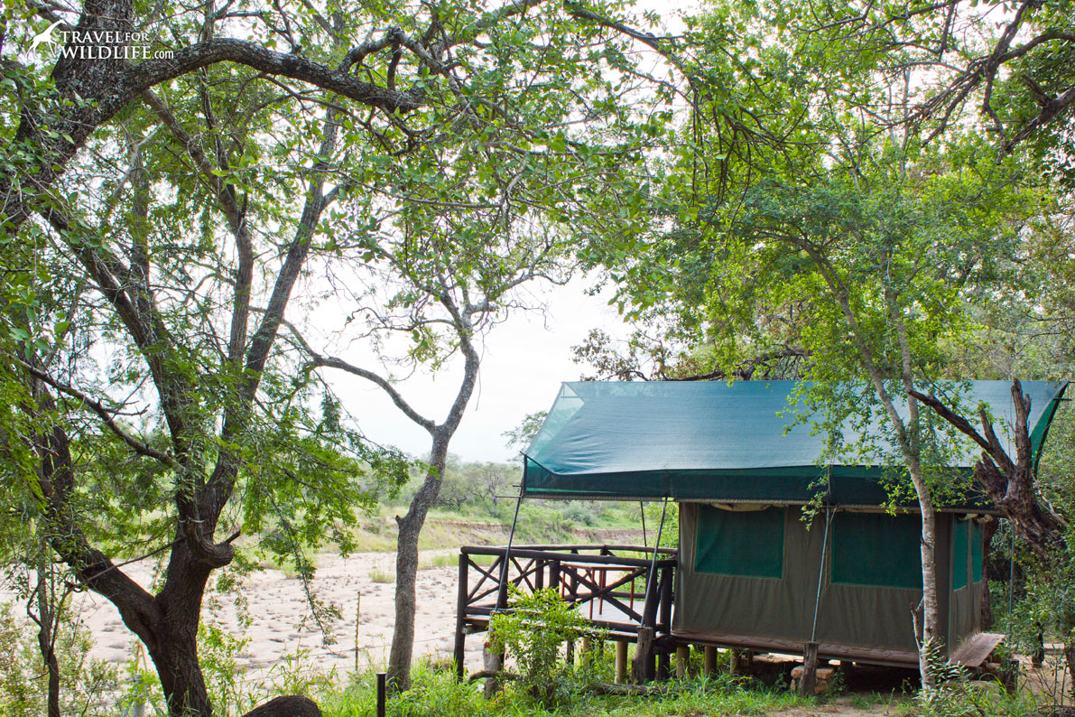 Tamboti Tented Camp is one the satellite Kruger National Park camps.