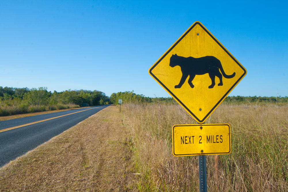 Florida panther animal crossing sign