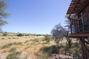 Wilderness camps in the Kalahari is the way to go