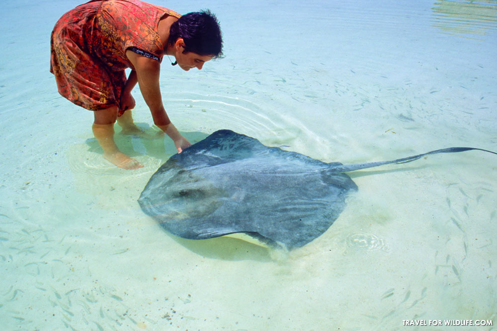 Petting a stingray in Isla Contoy