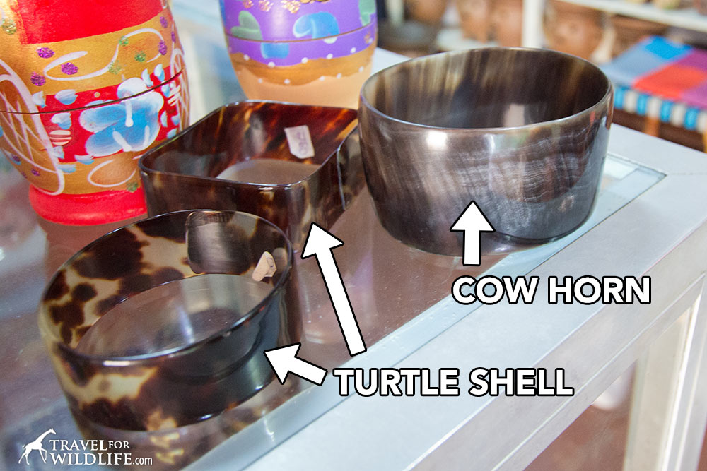 cow horn vs turtle shell bracelets