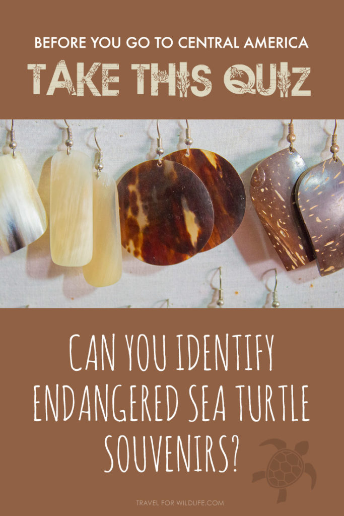 Heading to Central America or the Caribbean? Take this quiz to see if you can identify illegal souvenirs made from endangered sea turtle shell first!