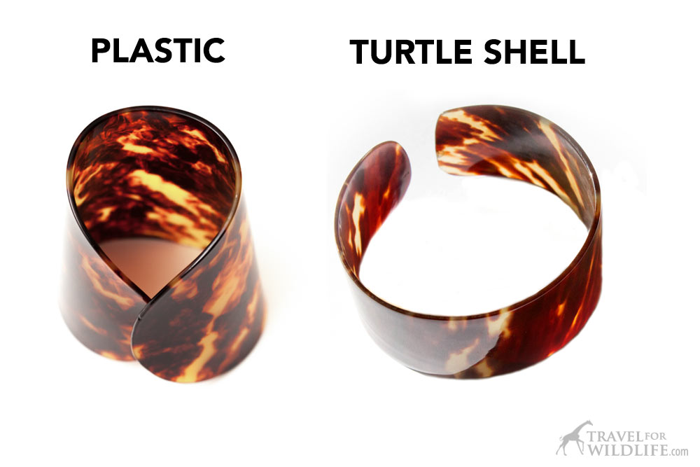 plastic vs tortoiseshell, how to tell real turtle shell from plastic