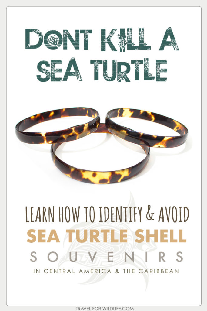 Help save the Hawksbill Sea Turtle from extinction. Read this guide before you travel to Central American or the Caribbean so you can avoid buying souvenirs made from endangered sea turtle shell!