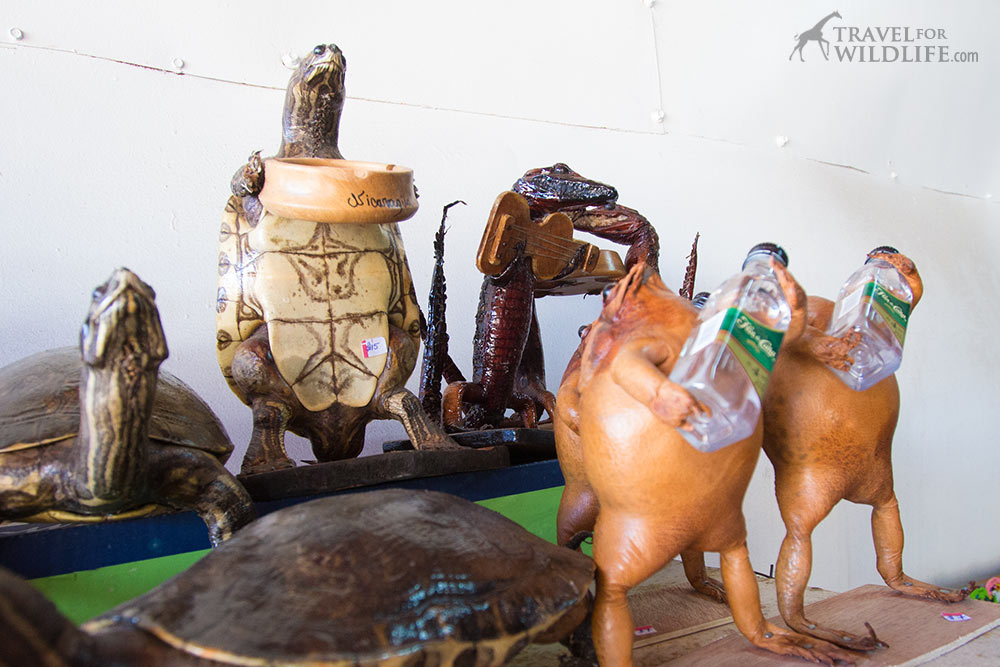 Illegal wildlife trade: animal products for sale in Nicaragua