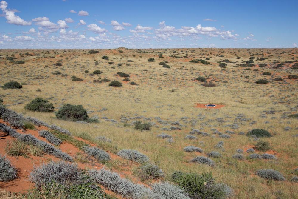 Kalahari waterhole