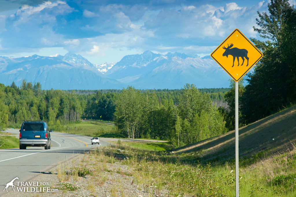 Animal crossing signs: moose crossing sign