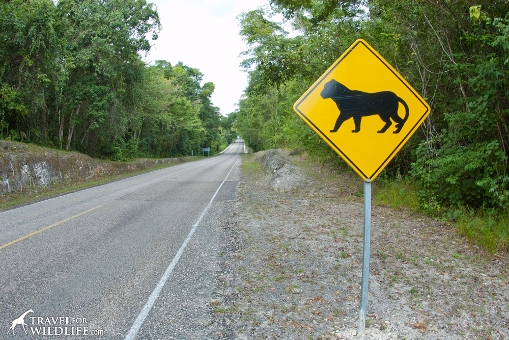 Animal crossing signs: jaguar crossing sign