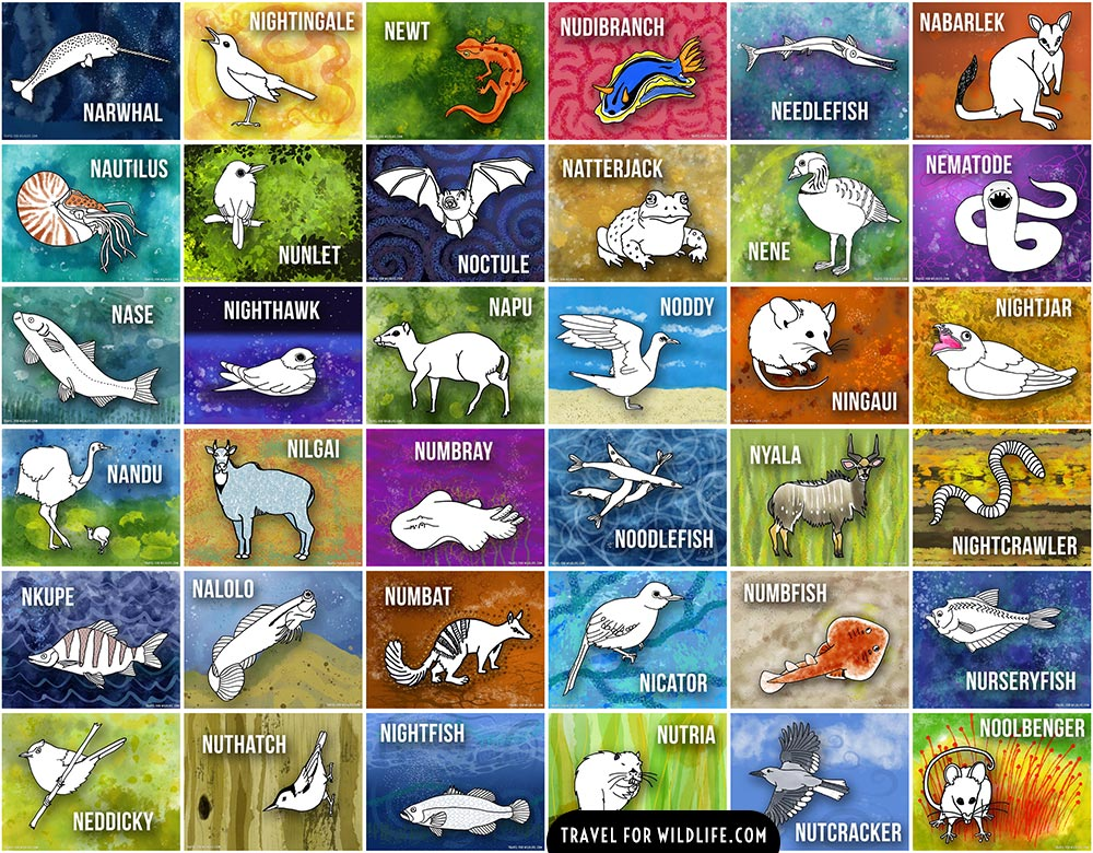 Animals beginning with N