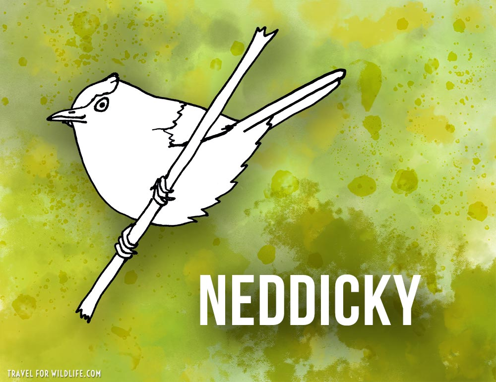 Animals that start with n - Neddicky bird illustration