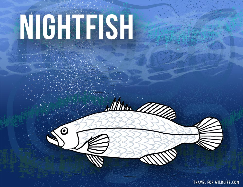 Animals that start with n -Nightfish illustration