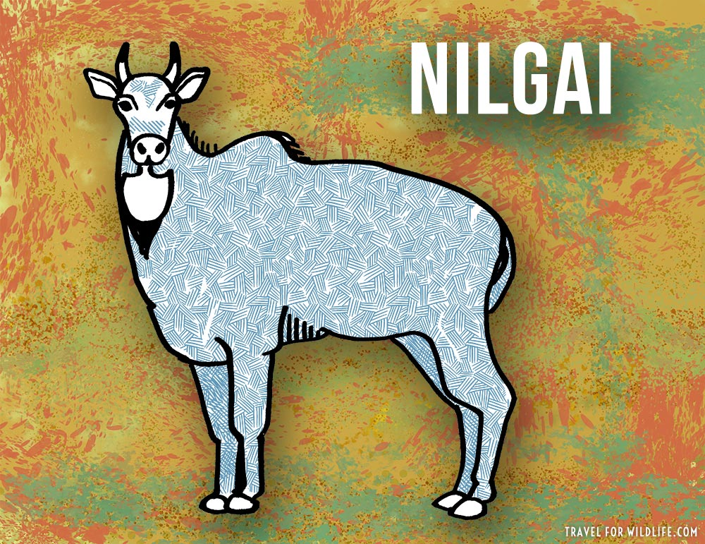 Animals that start with n - Nilgai illustration