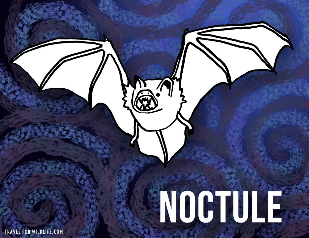 Noctule: Animals That Start With N