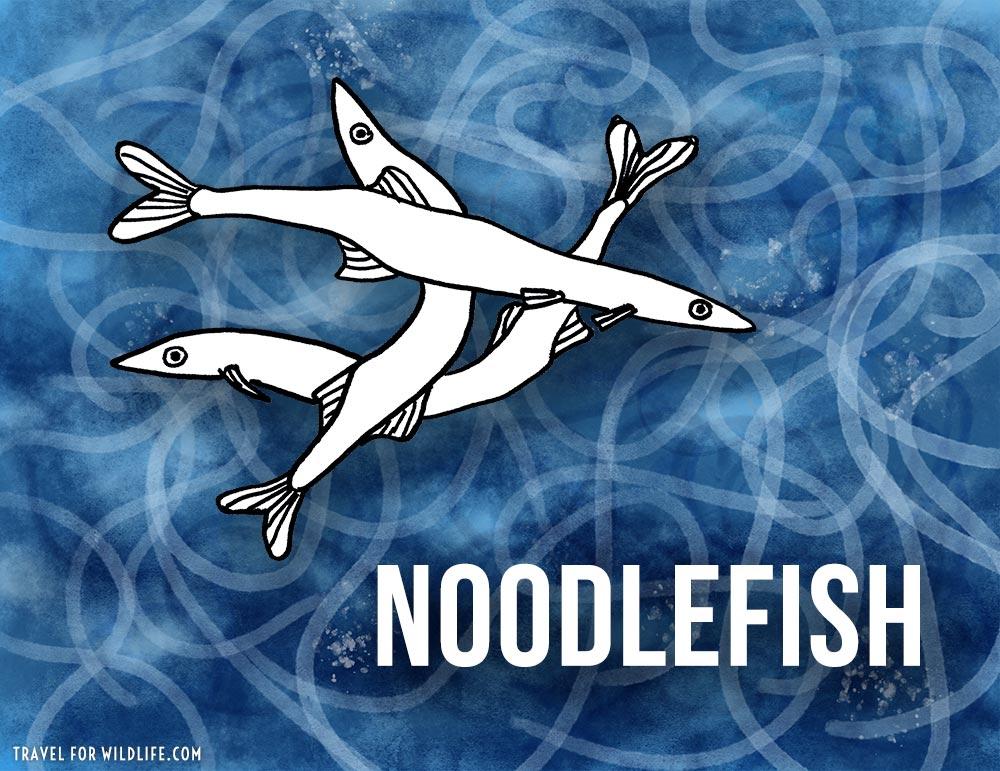 Animals that start with n - Needlefish illustration