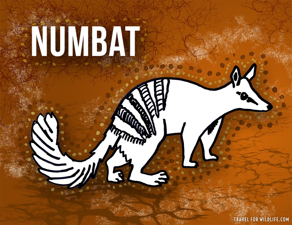 Animals that start with n - Numbat illustration