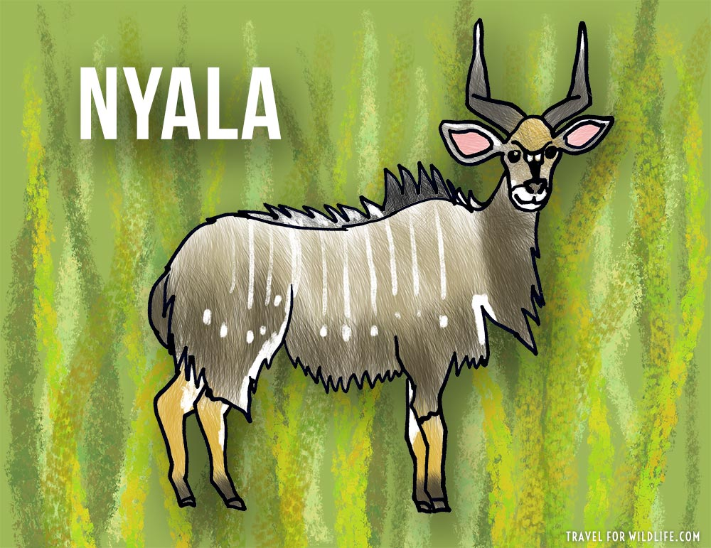 Animals that start with n - Nyala illustration