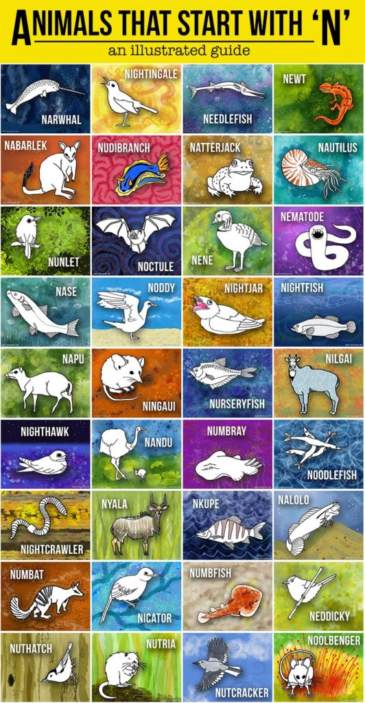 A beautifully illustrated list of animals that start with N!
