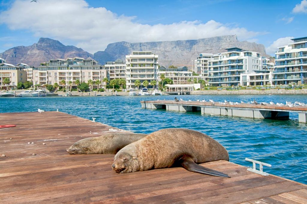 Follow Cape Town safety rules and enjoy your vacation by Table Mountain