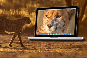 how to edit videos of wildlife with adobe premiere pro tutorials