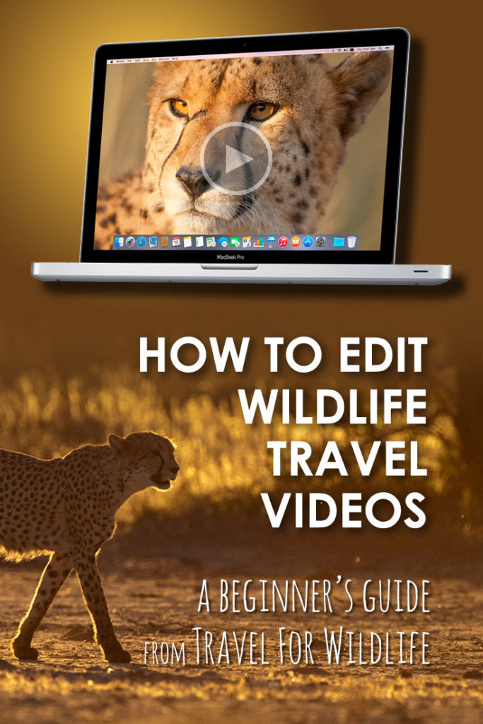 Want to learn how to edit your own wildlife and travel videos? This beginner's guide will help you get started!