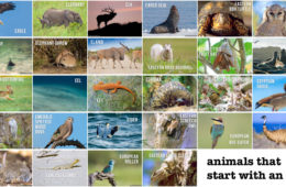 Animals that start with an e