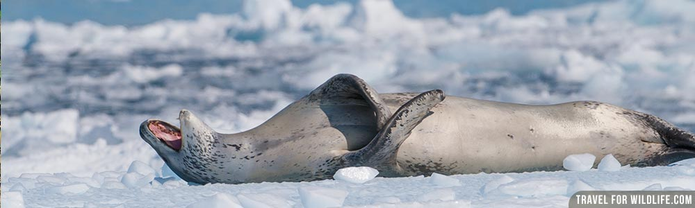 Antarctica wildlife guide
