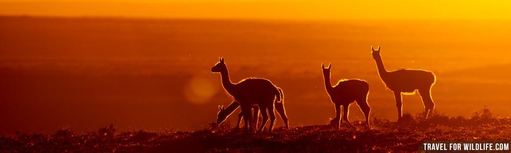 Argentina wildlife guide