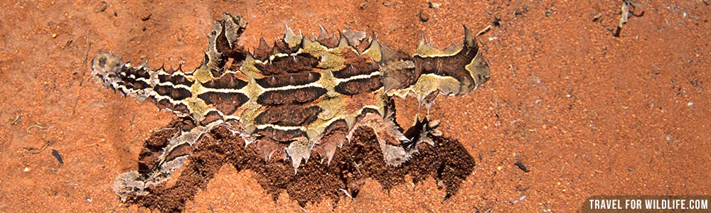 australia wildlife destinations guide