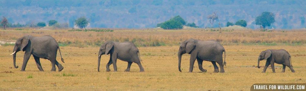 Botswana wildlife guide