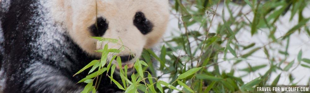 china wildlife guide