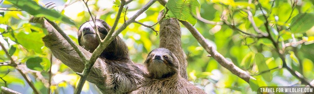 Costa Rica wildlife guide