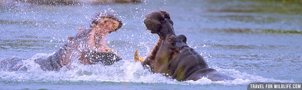 Malawi wildlife guide
