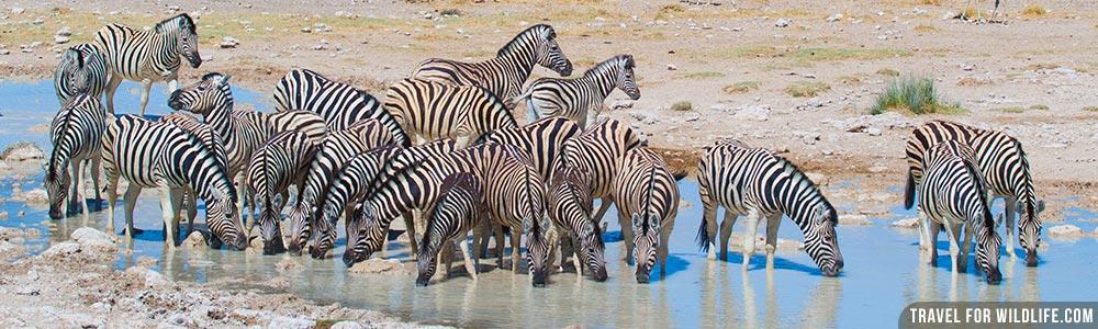 Namibia wildlife guide