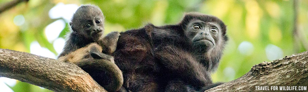Nicaragua wildlife guide