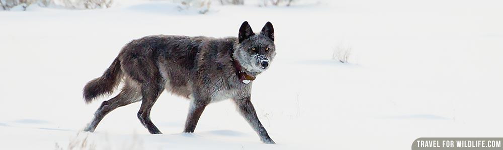 United States wildlife guide