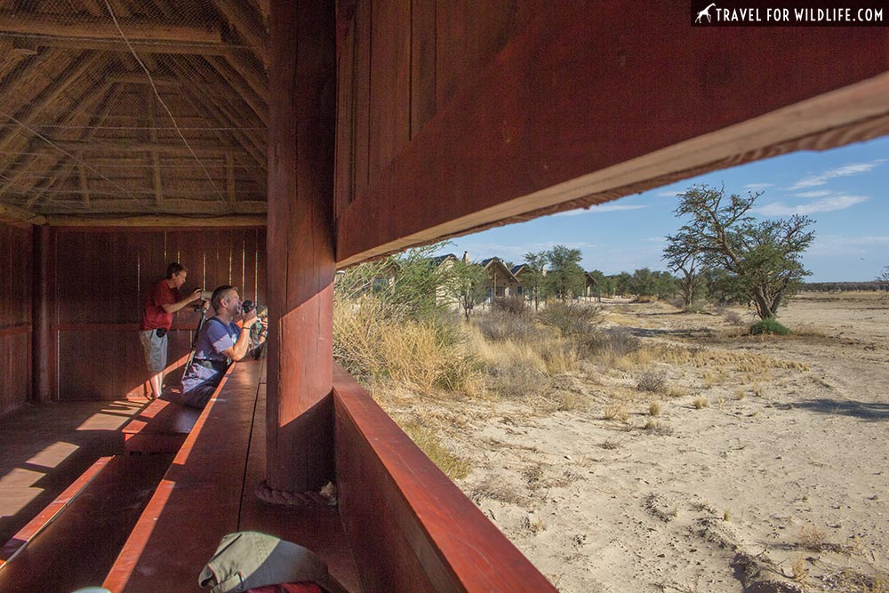shooting from the bird hide at Nossob Camp in the Kgalagadi Transfrontier Park, South Africa